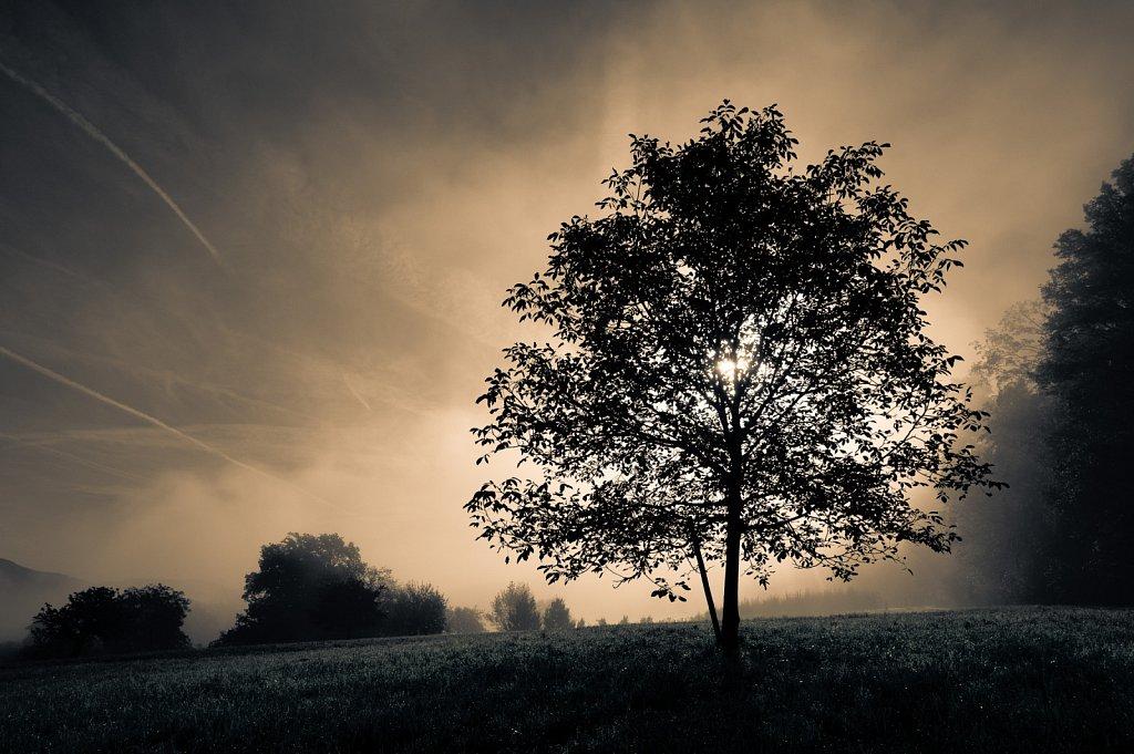 tree-x-ray