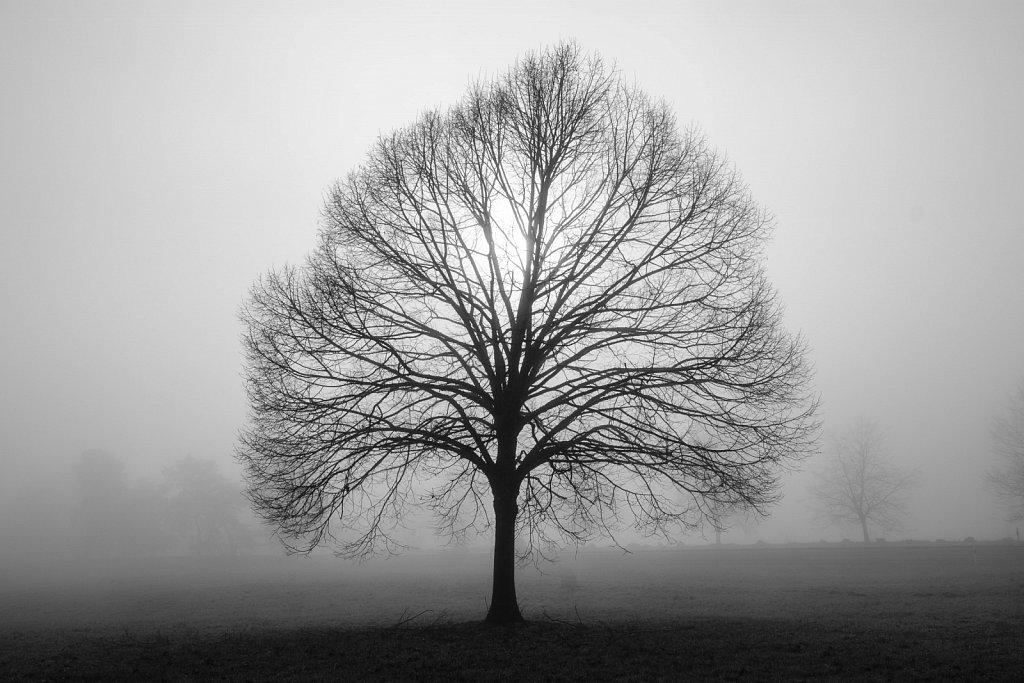 171225-nature-115748.jpg
