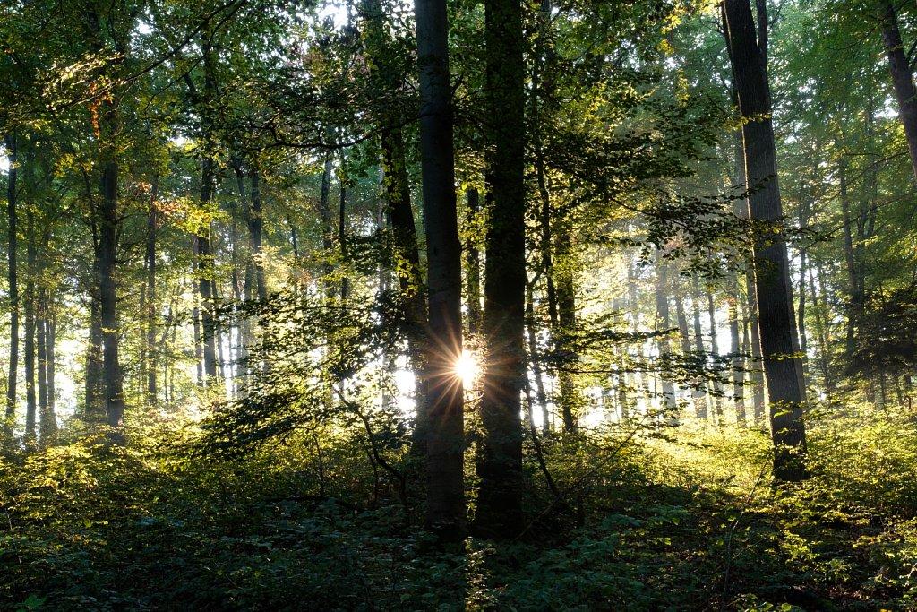 170921-nature-082548.jpg