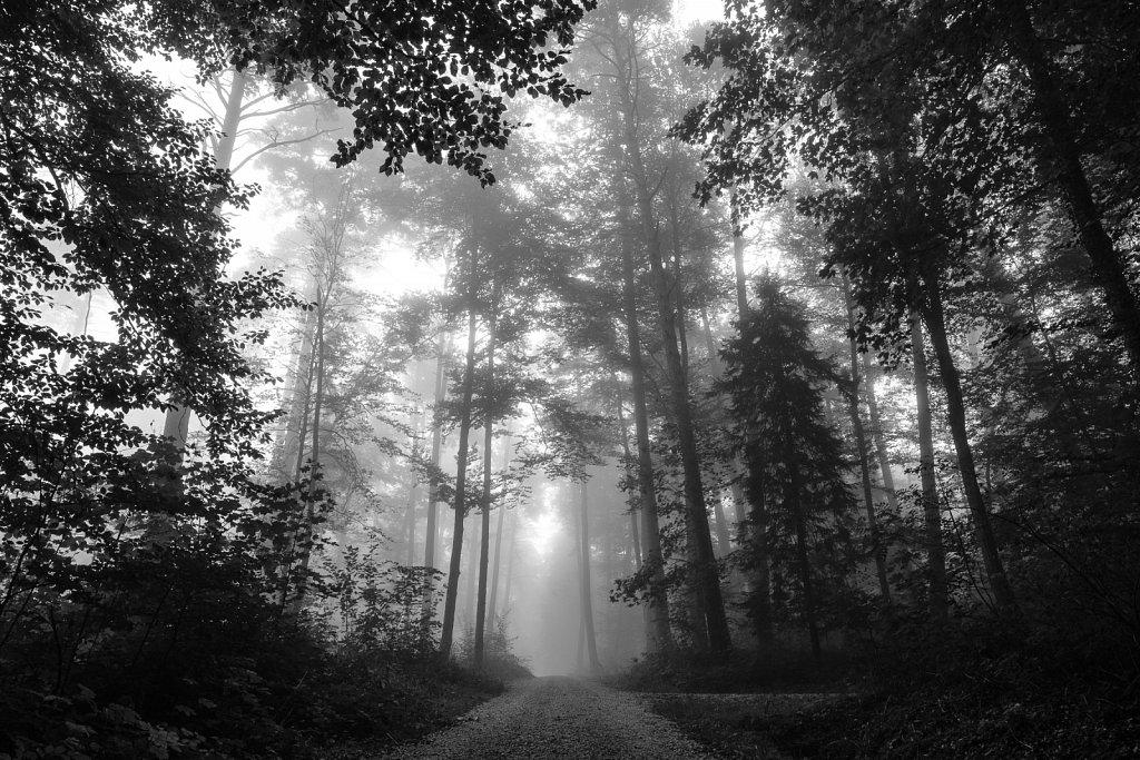 181004-nature-083518.jpg